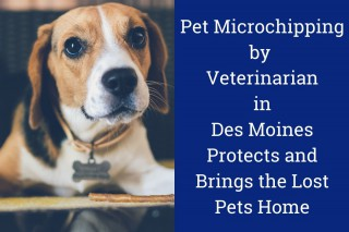 Pet Microchipping by Veterinarian in Des Moines Protects and Brings the Lost Pets Home