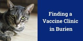 Finding a Vaccine Clinic in Burien