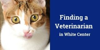 Finding a Veterinarian in White Center